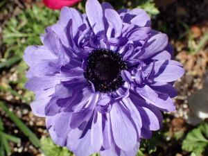 2021.02.06(薄紫の花)