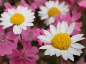 2021.05.01(白い花とピンクの花)
